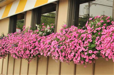 flowers for your home d 233 cor adorable home wow window boxes cincinnati ohio the flower show yeatman
