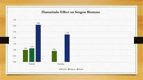 Bibit Sengon Umur 3 Bulan agro timber consultant pengaruh humatani terhadap