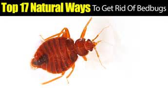 top 17 ways to get rid of bedbugs