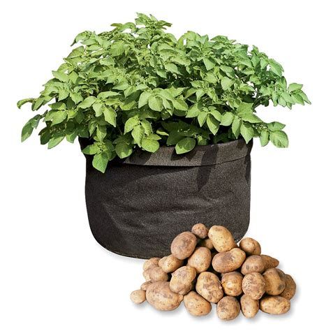 Grow Bags   Tomatoes, Peppers, Herbs and Potatoes   The