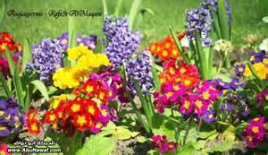 How To Garden Flowers النباتات وانواعها واشكالها