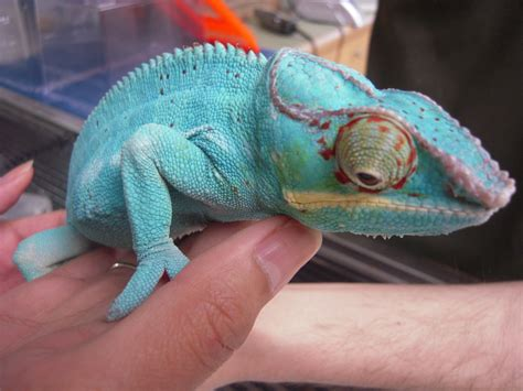 exotic pets human health risk   global pet trade