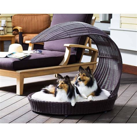 beautiful dog beds   instantly enhance  homes decor barkpost