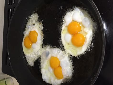 plymouth rock eggs plymouth rock for sale chickens breed information omlet