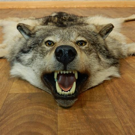 Wolf Rug For Sale by Alaskan Wolf Size Rug For Sale 14584 The Taxidermy