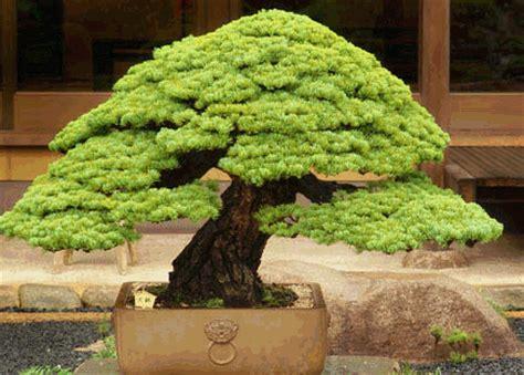 Garten Bonsai Selber Machen 4485 by Natureart Bonsai 196 Sthetik Und Wirkung