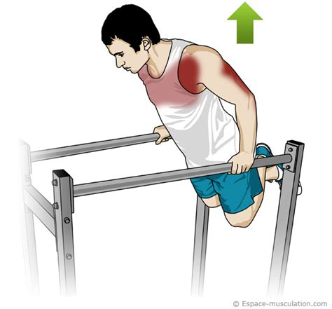 Banc A Dips by Dips Pectoraux Musculation Co