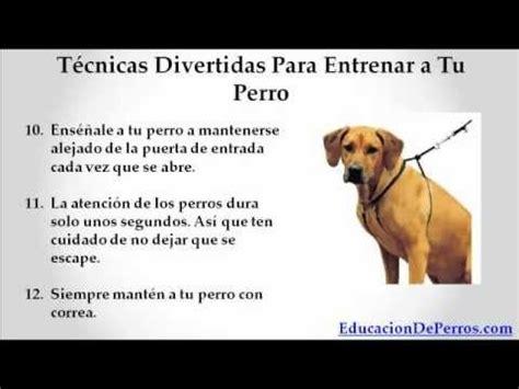 como un perro como entrenar a un perro t 233 cninas infalibles youtube
