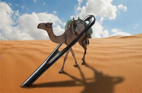 por el ojo de 8416748144 191 qu 233 significa que un camello pase por el ojo de una aguja tiempo de gracia