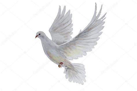 imagenes palomas blancas volando una paloma blanca volando gratis fotos de stock