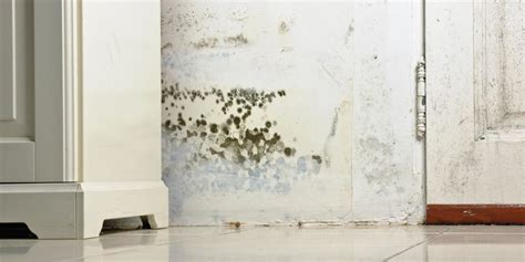 how to stop mold in bedroom how to get rid of mold and mildew in bedroom www