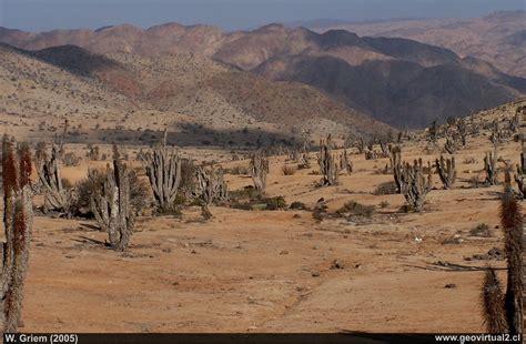 imagenes de paisajes zona norte de chile parque nacional pan de az 250 car regi 243 n de atacama chile