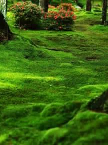 moss garden saiho ji kyoto japan alma would have