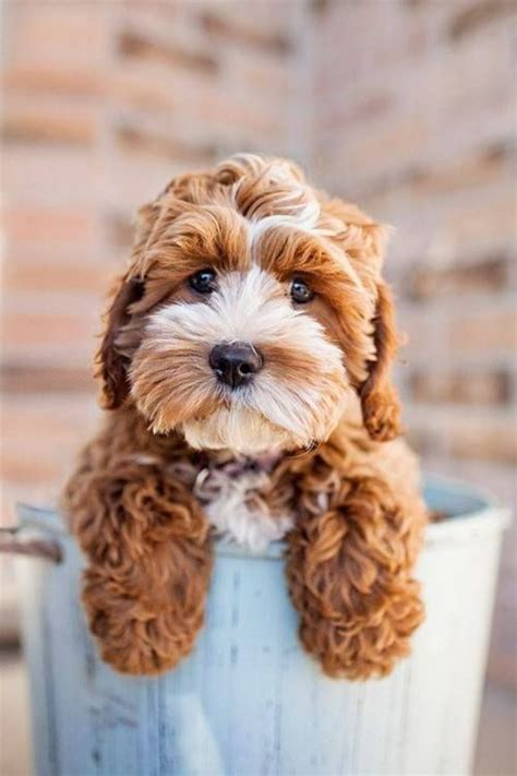 doodle jump names can you type 1000 ideas about golden doodle mini on