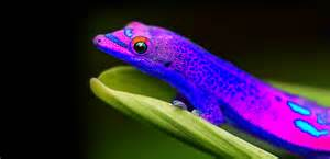 purply blue geko colored creatures