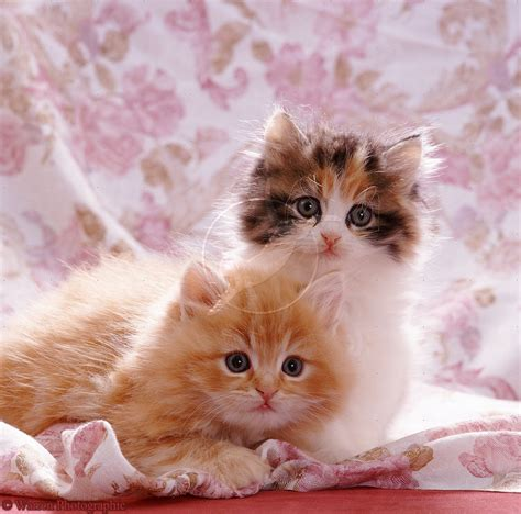 adorable puppies and kittens dogs pets cats and kittens pictures and wallpapers
