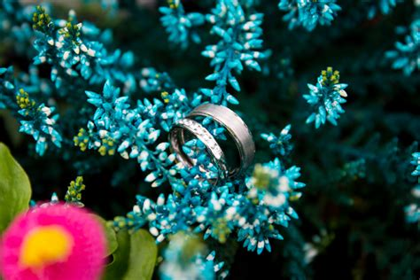 amazing wedding photography amazing wedding rings photography