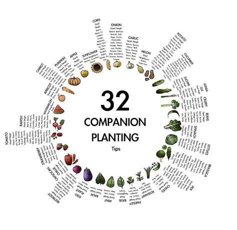 companion planting chart living herbs new zealand companion planting tips gardening pinterest