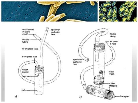 Buku The Absorbent Mind Pikiran Yang Mudah Menyerap Montessory Ar divisi insect metode pengamatan dan pengumpulan serangga