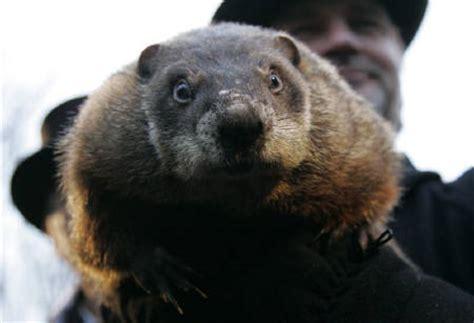 groundhog day yahoo 春を告げる グラウンドホッグデー groundhog day その他ペット ナンチョ動物園