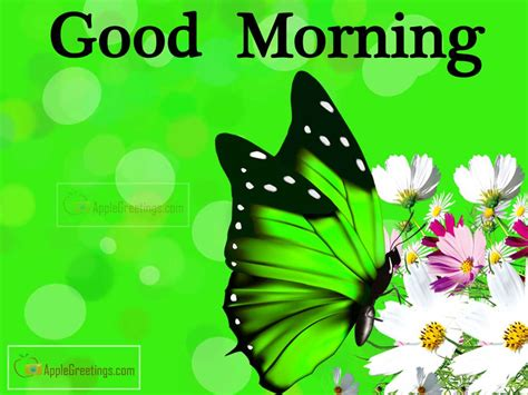 pictures of good morning t 87 2 id 1336