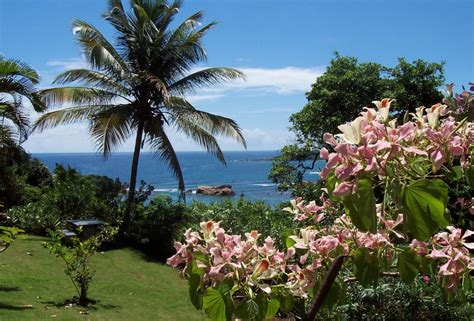sea cliff cottages dominica sea cliff cottages in dominica myvacationpages
