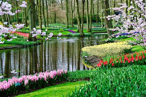 Keukenhof A Haven Of Tulips In Amsterdam The Netherlands Flower Garden Amsterdam