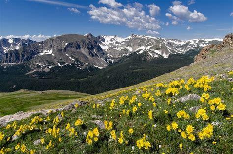 Bedroom Colora Colorado Wildflower Road Trip Wsj