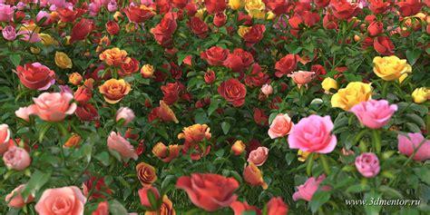 Garden Of Roses by Garden