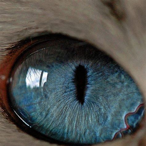 imagenes de ojos animales 43 unique animal eyes