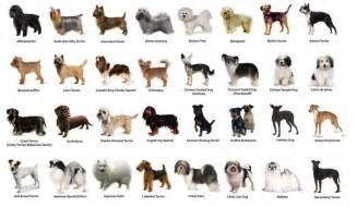 small dog breeds images