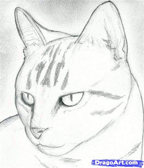 how to draw doodle cat 1 how to draw a cat draw a realistic cat step by step