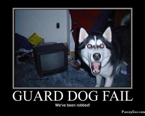 Siberian Husky Meme - siberian husky memes image memes at relatably com