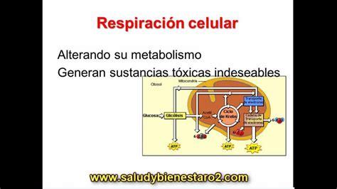 imagenes de respiracion yoga synergy o2 y su importancia en la respiraci 243 n celular