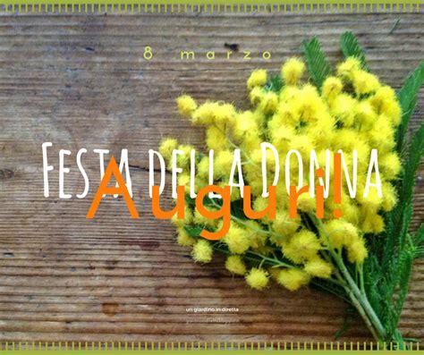 fiori di marzo fiori di marzo mimosa acacia dealbata un giardino in