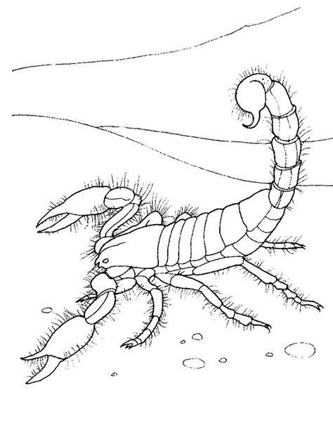 Printable And Coloring Pages by Free Printable Scorpion Coloring Pages For