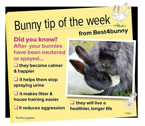 Must For The Week The House Bunny by 1000 Images About Pet Rabbits On Rabbit Toys