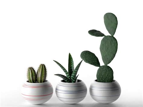 cactus planters cheerful porcelain mini cactus planters