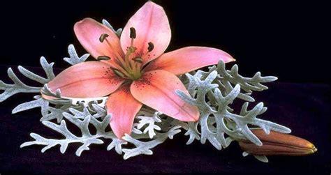 fiori e farfalle piante fiori farfalle