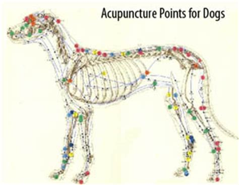 acupuncture for dogs wheaton pet acupuncture animal clinic wheaton