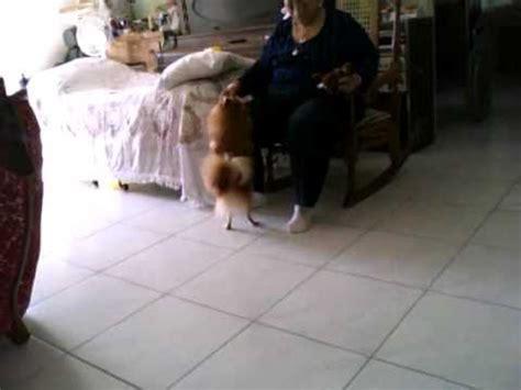 cojiendo conmi hermana el perro cojiendo a mi hermana y bailando youtube