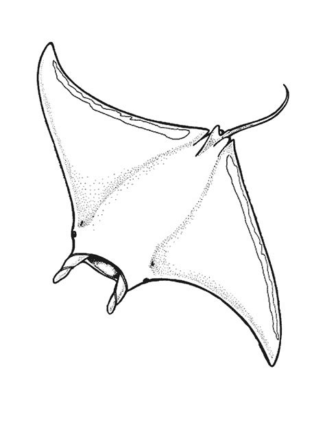 manta ray bubble air coloring pages sketch coloring page