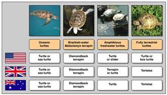 file turtle names in different languages jpg wikipedia