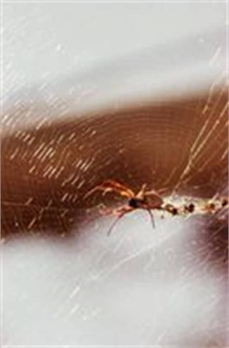 Keep Spiders Out Of Shed by How To Keep Spiders Out Of A Garden Shed Ehow
