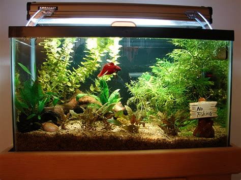 bettas especially those with longer fins but it is not the size of the