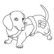 coloring pages of maltese puppies maltese dog coloring pages coloring pages