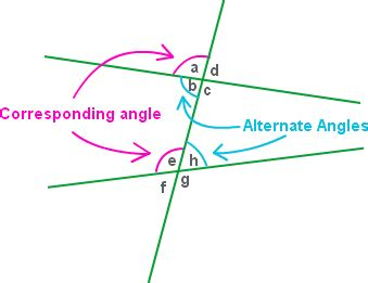 What Is A Alternate Interior Angle by Alternate Angles Related Keywords Suggestions