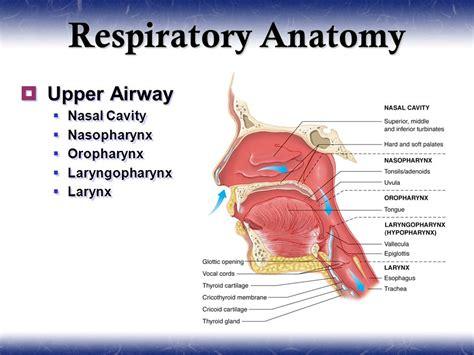 intubation diagram pulmonology ppt