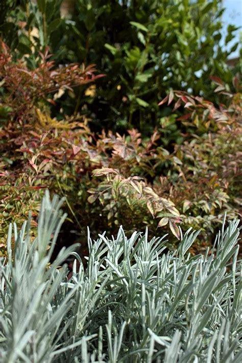 giardini con ulivi di giardini terrazzi e giardini pensili si sposa con