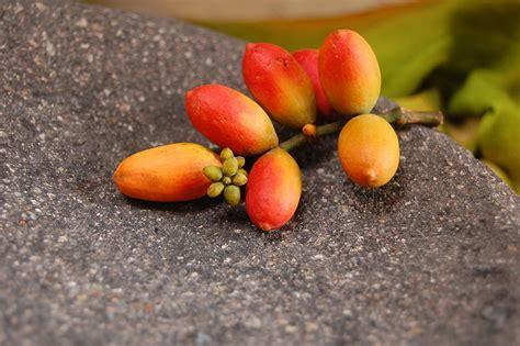 fruit harimurti